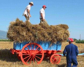 Carro agricolo Umbro a quattro ruote
